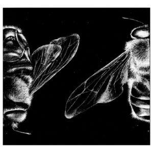 Hmyz III · litografie · 23 x 23 cm 2006