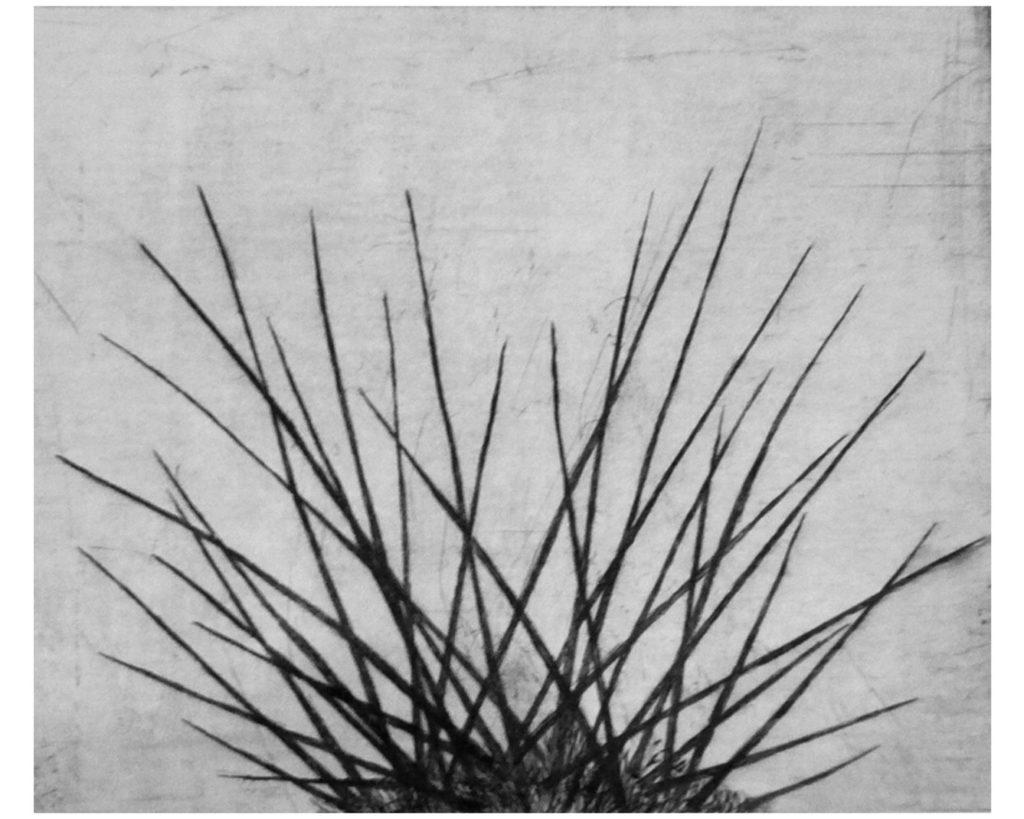 Kaktusy I · suchá jehla · 25 x 30 cm 2008