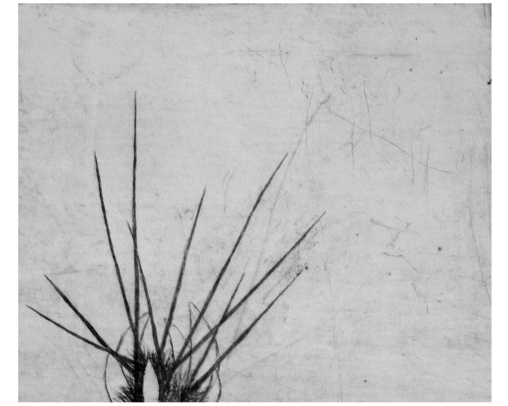 Kaktusy II · suchá jehla · 25 x 30 cm 2008
