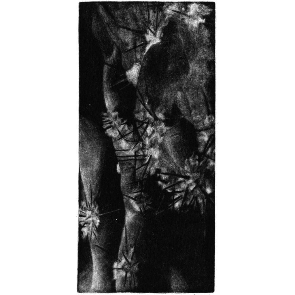 Kaktus IV · mezzotinta · 20 x 9 cm 2009
