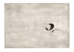 grafický cyklus Slíva · mezzotinta · 35 x 50 cm 2014