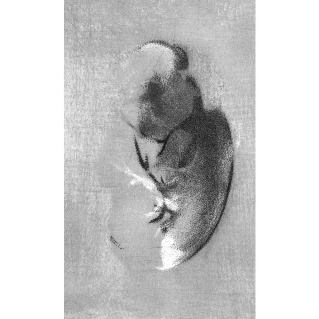 Prolínající se II · digitální tisk · 100 x 70 cm 2016