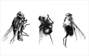 Insect I · lithography · 23 x 30 cm 2006