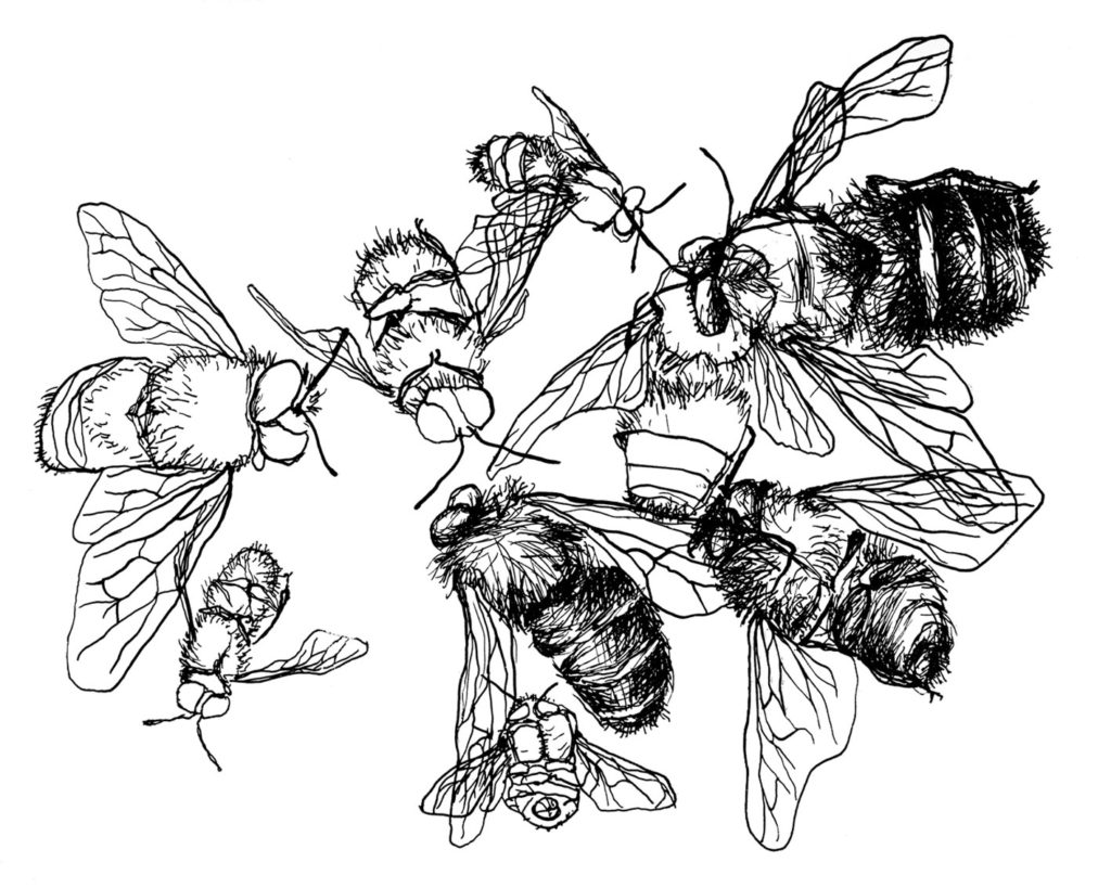Insect II · lithography · 23 x 30 cm 2006