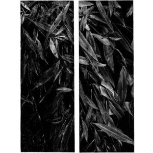 Willow · mezzotint · 25 x 9 cm 2007