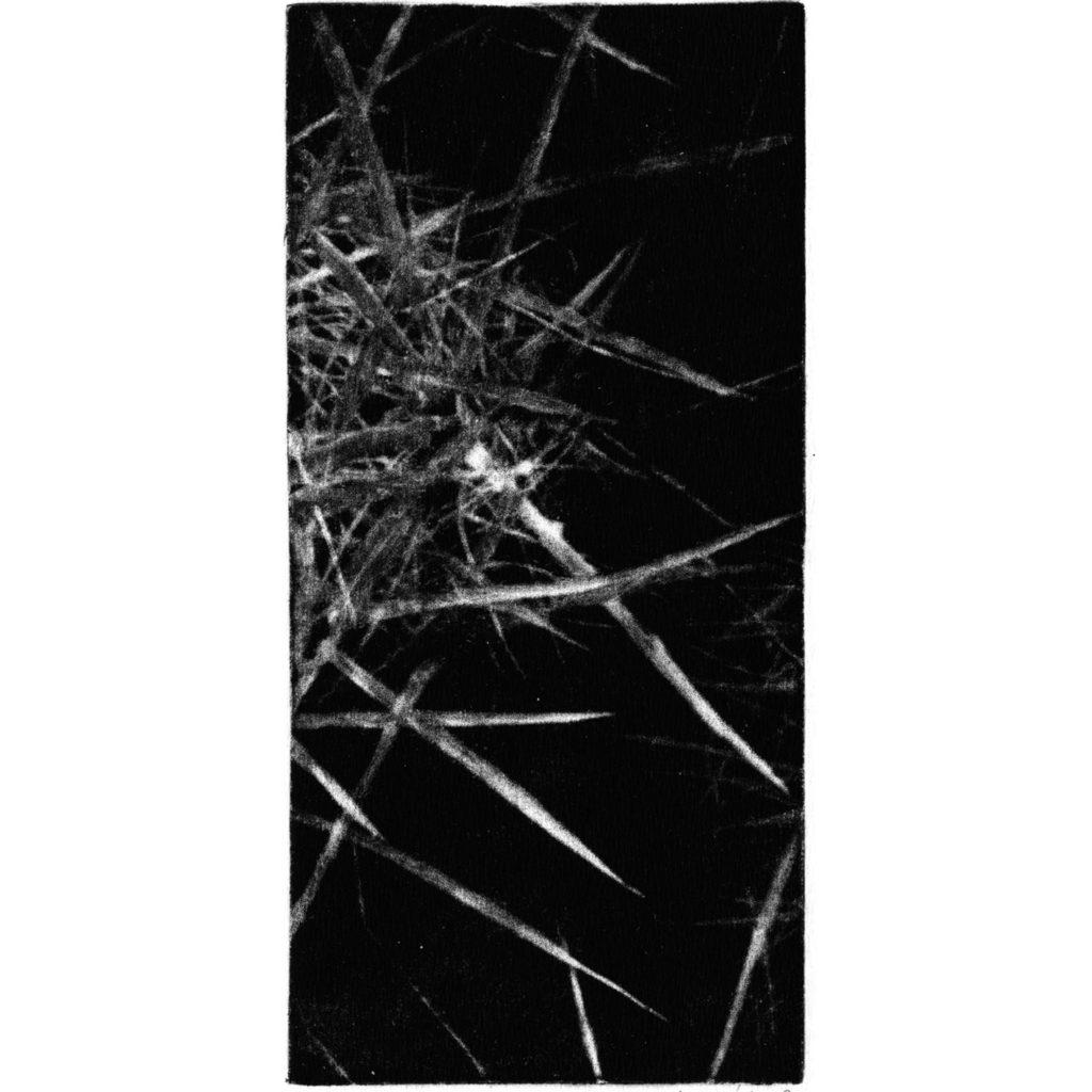 Cactus I · mezzotint · 20 x 9 cm 2009