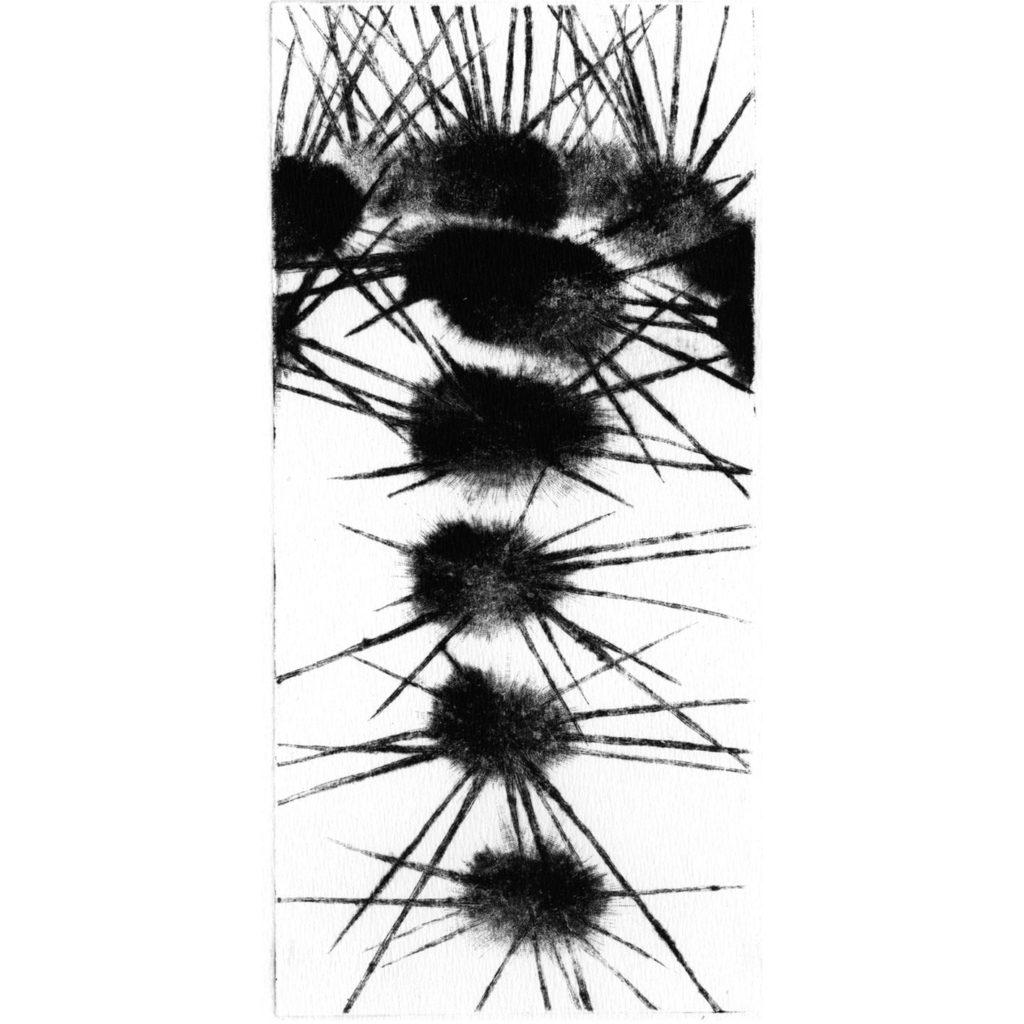 Cactus V · mezzotint · 20 x 9 cm 2009