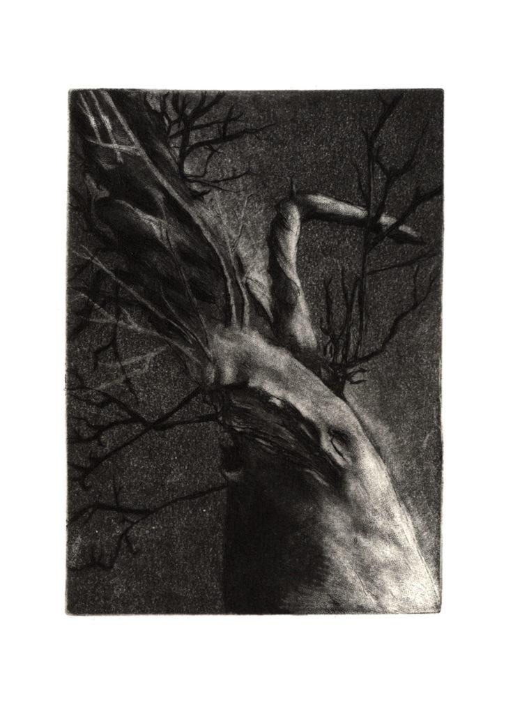 Tree · gravure · 11 x 8 cm 2011