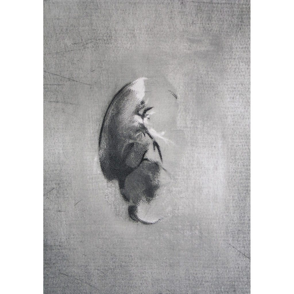Shading into IV · digital print · 100 x 70 cm 2016