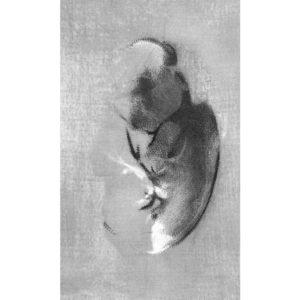 Shading into II · digital print · 100 x 70 cm 2016